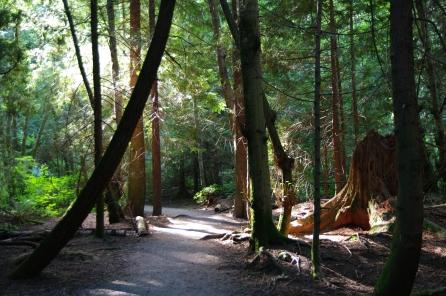 Pacific Spirit Regional Park - Vancouver, BC